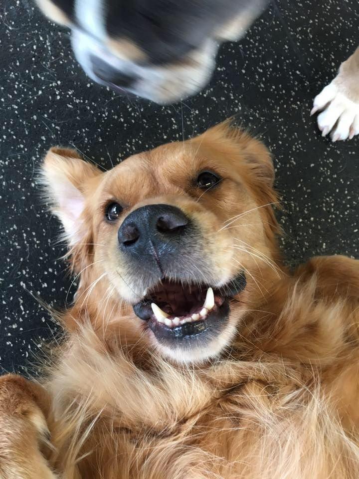 Dog Training Woodbury, MN