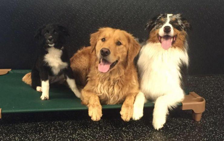 Dog Boarding - sleeping dogs